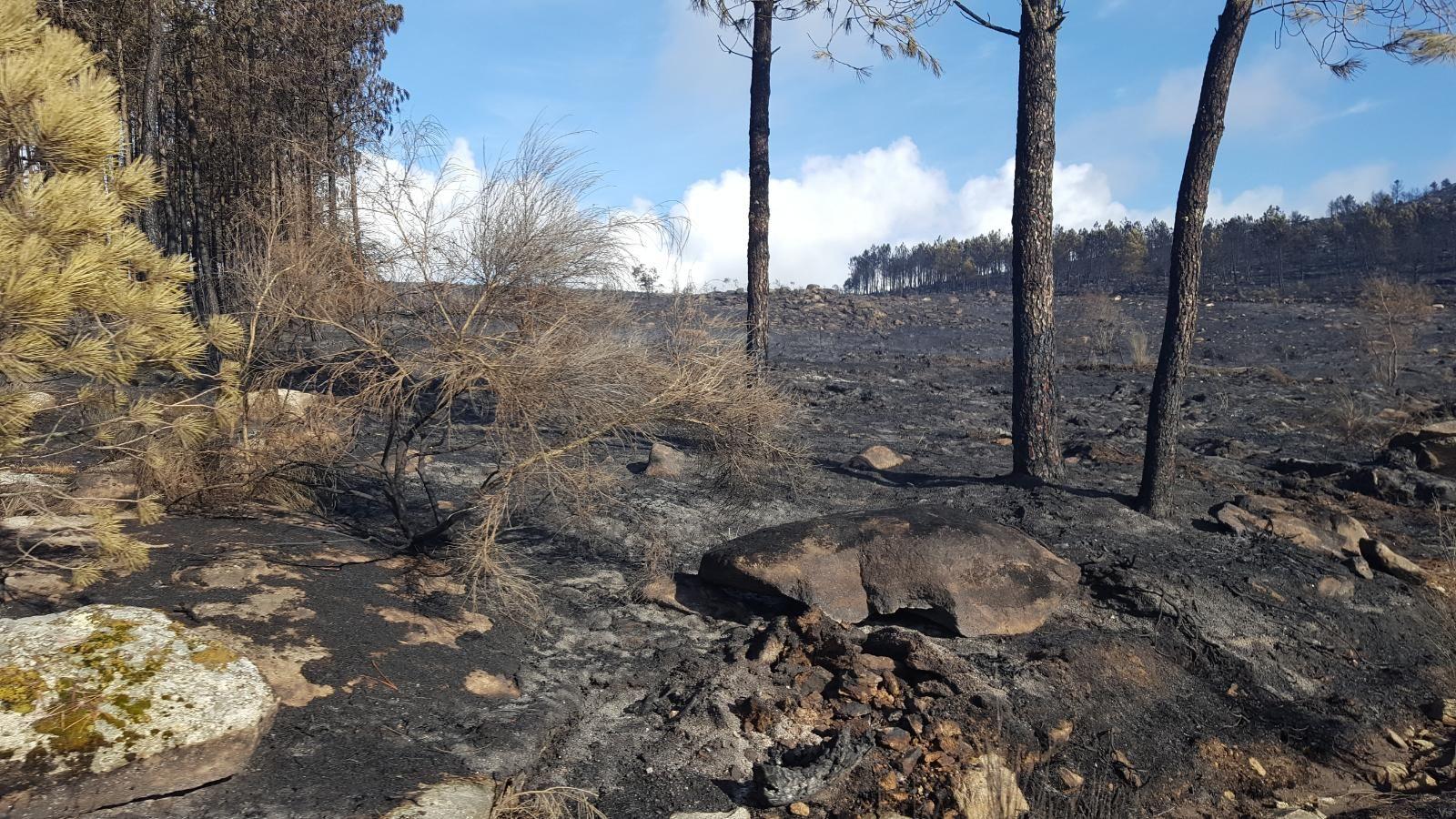 Terreno quemado